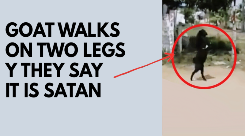 Goat walks on two legs and they say it is satan